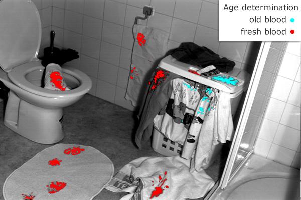 De rode plekken zijn vers bloed, de blauw gemarkeerde vlekken zijn oud.